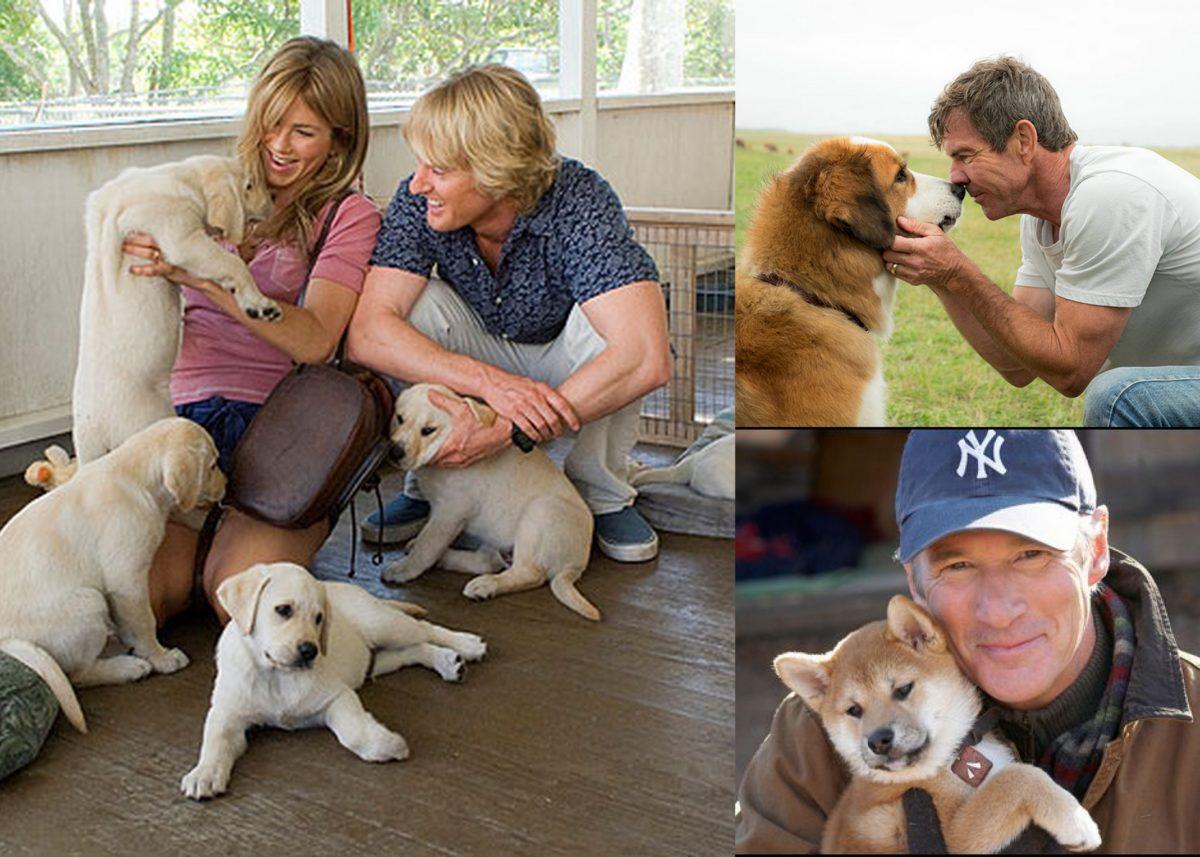 O relacji człowieka z psem w kinie: co dostajemy od czworonożnych przyjaciół
