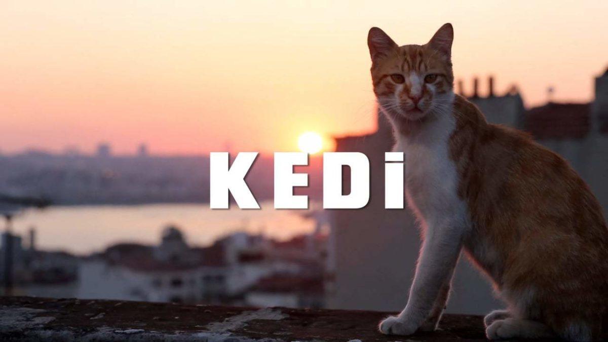 """""""Kedi – sekretne życie kotów"""" czyli czego możemy nauczyć się od kotów?"""